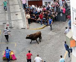 dia del toro arcos cadiz