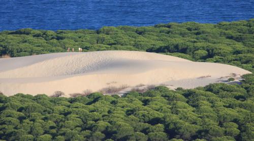 pinares duna bolonia playa