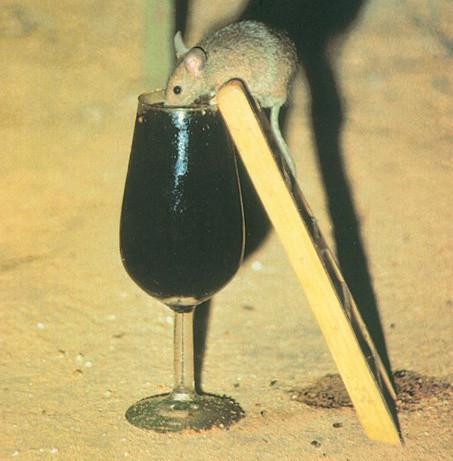 bodegas jerez raton vino